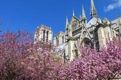 Ανθίζοντας δέντρα στο υπόβαθρο του καθεδρικού ναού της Notre Dame Στοκ εικόνες με δικαίωμα ελεύθερης χρήσης