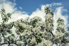 ανθίζοντας δέντρα Στοκ Εικόνα