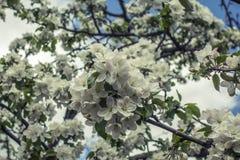 ανθίζοντας δέντρα Στοκ φωτογραφία με δικαίωμα ελεύθερης χρήσης