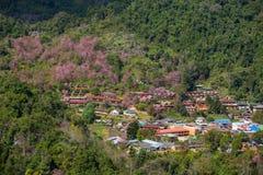 Ανθίζοντας δέντρα sakura στο χωριό ANG Khang Doi Στοκ Φωτογραφίες