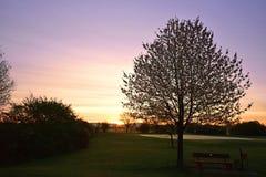 Ανθίζοντας δέντρο στην ανατολή Στοκ φωτογραφία με δικαίωμα ελεύθερης χρήσης
