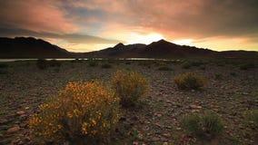 Ανθίζοντας έρημος στο ηλιοβασίλεμα Μογγολία, Gobi απόθεμα βίντεο