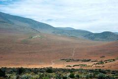 Ανθίζοντας έρημος στο της Χιλής Atacama Στοκ Φωτογραφία