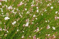 Ανθίζοντας ανθίζοντας άσπρο υπόβαθρο λουλουδιών με τα πράσινα φύλλα Στοκ φωτογραφίες με δικαίωμα ελεύθερης χρήσης