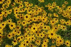 Ανθίζοντας ανθίζοντας υπόβαθρο λουλουδιών κίτρινο και πράσινο Στοκ Φωτογραφία