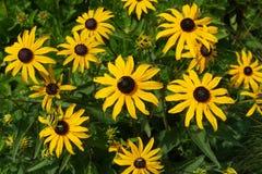 Ανθίζοντας ανθίζοντας υπόβαθρο λουλουδιών κίτρινο και πράσινο Στοκ Φωτογραφίες