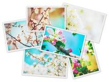 Ανθίζοντας δέντρα άνοιξη κολάζ Στοκ φωτογραφίες με δικαίωμα ελεύθερης χρήσης