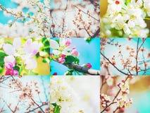 Ανθίζοντας δέντρα άνοιξη κολάζ Στοκ Εικόνες