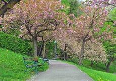 Ανθίζοντας δέντρα άνοιξη στο πάρκο Στοκ φωτογραφία με δικαίωμα ελεύθερης χρήσης