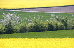 ανθίζοντας δέντρα μήλων Στοκ εικόνες με δικαίωμα ελεύθερης χρήσης