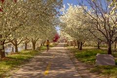 Ανθίζοντας δέντρα μηλιάς καβουριών που ευθυγραμμίζουν την πορεία ποδηλάτων Στοκ φωτογραφία με δικαίωμα ελεύθερης χρήσης