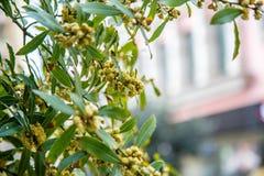 Ανθίζοντας δέντρα στη Ιστανμπούλ στοκ φωτογραφία με δικαίωμα ελεύθερης χρήσης