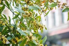 Ανθίζοντας δέντρα στη Ιστανμπούλ στοκ εικόνες