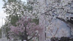 ανθίζοντας δέντρο κλάδων φιλμ μικρού μήκους