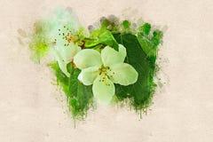 Ανθίζοντας δέντρο μηλιάς το Μάιο Ακρυλικό μελάνι Στοκ Εικόνα