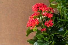 Ανθίζοντας εγκαταστάσεις λουλουδιών σε ένα μπεζ υπόβαθρο Στοκ Φωτογραφίες