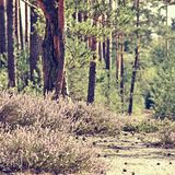 Ανθίζοντας ερείκη στη φύση του τσεχικού εδάφους Macha ` s περιοχής τουριστών στις καλοκαιρινές διακοπές Στοκ εικόνα με δικαίωμα ελεύθερης χρήσης