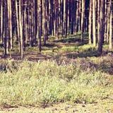 Ανθίζοντας ερείκη στη φύση του τσεχικού εδάφους Macha ` s περιοχής τουριστών στις καλοκαιρινές διακοπές Στοκ Φωτογραφία