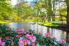 Ανθίζοντας ηλιόλουστο πάρκο άνοιξη στοκ εικόνα