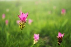 ανθίζοντας ηλίανθος σπόρων λουλουδιών ανασκόπησης Στοκ εικόνα με δικαίωμα ελεύθερης χρήσης
