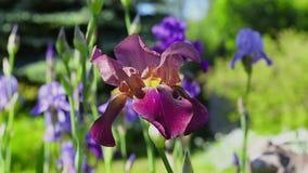 Ανθίζοντας θερινά λουλούδια απόθεμα βίντεο