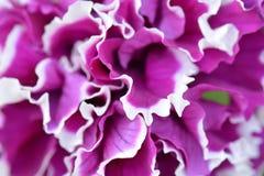 Ανθίζοντας ιώδες μπλε λουλούδι Μπλε υπόβαθρο λουλουδιών Εκλεκτική εστίαση Στοκ φωτογραφίες με δικαίωμα ελεύθερης χρήσης