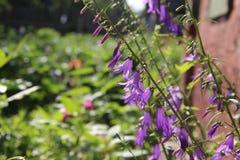 Ανθίζοντας ιώδη λουλούδια Στοκ φωτογραφία με δικαίωμα ελεύθερης χρήσης
