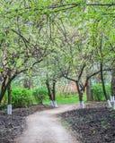 Ανθίζοντας κήπος μήλων στη φωτογραφία Στοκ Εικόνες