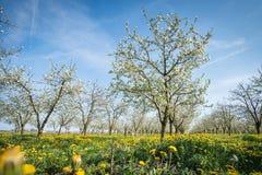 ανθίζοντας κήπος μήλων Στοκ φωτογραφίες με δικαίωμα ελεύθερης χρήσης