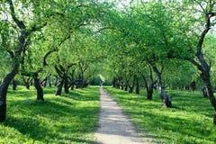 ανθίζοντας κήπος μήλων Στοκ εικόνες με δικαίωμα ελεύθερης χρήσης