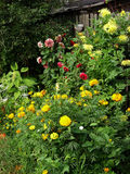 Ανθίζοντας κήπος με τα διαφορετικά λουλούδια Στοκ φωτογραφίες με δικαίωμα ελεύθερης χρήσης