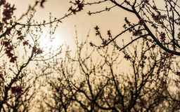 Ανθίζοντας κήπος ροδάκινων Στοκ φωτογραφίες με δικαίωμα ελεύθερης χρήσης