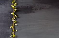 Ανθίζοντας κλάδοι δέντρων στο Μαύρο Ο σκούρο γκρι άνθρακας χρωματίζει backgr Στοκ Φωτογραφία
