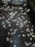 Ανθίζοντας κλάδοι λουλουδιών sakura που κρεμούν πέρα από το ρεύμα ποταμών Meguro Στοκ Εικόνες