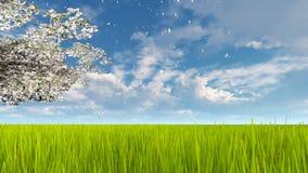 Ανθίζοντας κλάδος δέντρων κερασιών στην άνοιξη ημέρα 4K ελεύθερη απεικόνιση δικαιώματος