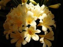 ανθίζοντας λουλούδια κίτρινα Στοκ φωτογραφία με δικαίωμα ελεύθερης χρήσης