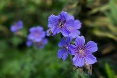 Ανθίζοντας λουλούδια στο δάσος στο πρωί στοκ φωτογραφίες