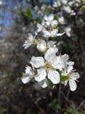 ανθίζοντας λουλούδια Στοκ φωτογραφία με δικαίωμα ελεύθερης χρήσης