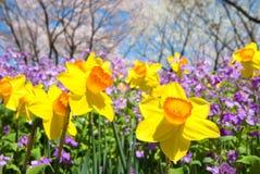 ανθίζοντας λουλούδια Στοκ εικόνα με δικαίωμα ελεύθερης χρήσης