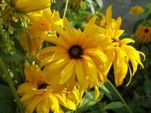 ανθίζοντας λουλούδι κίτρινο Στοκ Εικόνα