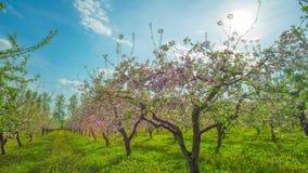 Ανθίζοντας οπωρώνας μήλων, πανοραμικό χρόνος-σφάλμα φιλμ μικρού μήκους