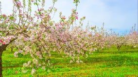 Ανθίζοντας οπωρώνας μήλων, χρόνος-σφάλμα με τον ολισθαίνοντα ρυθμιστή απόθεμα βίντεο
