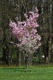 Ανθίζοντας οπωρώνες την άνοιξη Ανθίζοντας δέντρα οπωρώνων και λουλούδια υάκινθων πλήρης άνοιξη λιβαδιών πικραλίδων ανασκόπησης κί Στοκ φωτογραφία με δικαίωμα ελεύθερης χρήσης