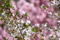 Ανθίζοντας οπωρώνες την άνοιξη Ανθίζοντας δέντρα οπωρώνων και λουλούδια υάκινθων πλήρης άνοιξη λιβαδιών πικραλίδων ανασκόπησης κί Στοκ Φωτογραφίες