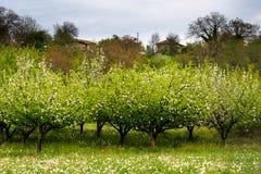 Ανθίζοντας λουλούδια και ανθίζοντας δέντρα Στοκ εικόνες με δικαίωμα ελεύθερης χρήσης