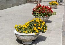 Ανθίζοντας λουλούδια φθινοπώρου για τη διακόσμηση οδών Στοκ εικόνες με δικαίωμα ελεύθερης χρήσης
