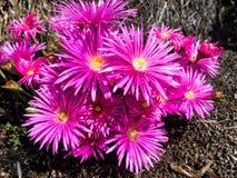 ανθίζοντας λουλούδια στοκ εικόνες
