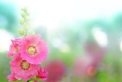 ανθίζοντας λουλούδια στοκ φωτογραφία