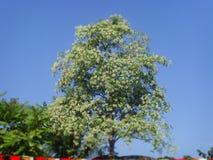 ανθίζοντας λουλούδι και μπλε ουρανός Στοκ εικόνα με δικαίωμα ελεύθερης χρήσης