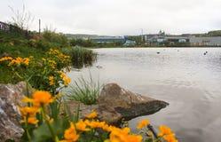 Ανθίζοντας λουλούδι σφαιρών Στοκ Φωτογραφίες
